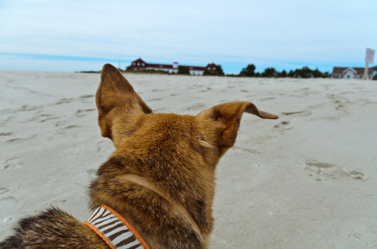 Cape May Point Beach (September 2014)