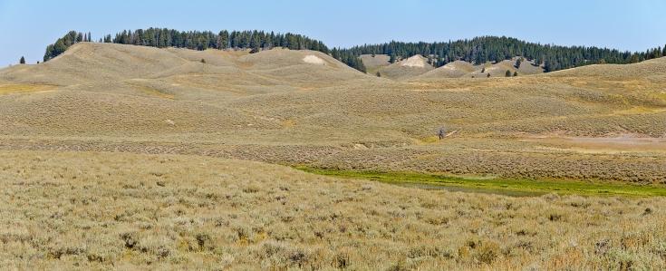 Hayden Valley - Yellowstone National Park - August, 2017