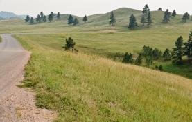 Wildlife Loop, Custer State Park, South Dakota - September, 2017