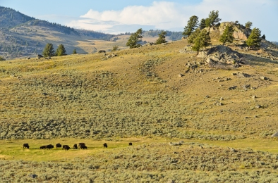 Lamar Valley, Yellowstone National Park - August, 2017