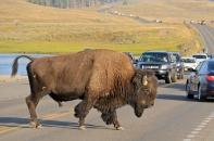 Buffalo don't give a shit.