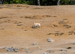 Whale Watching Cruise: Island Deer