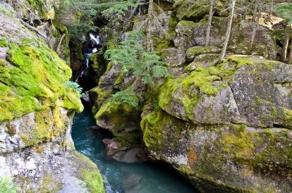Trail of Cedars