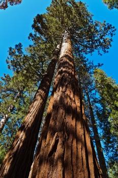 Yosemite National Park - October, 2014
