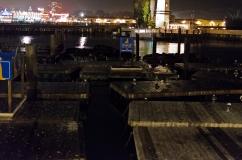 San Francisco, California: Sea Lions and gulls on the docks.